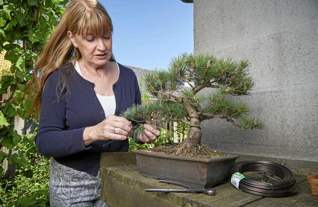 Maria Arborelius har drivit fram bonsaier i över 30 år och är kretsansvarig i södra kretsen i Svenska Bonsaisällskapet.