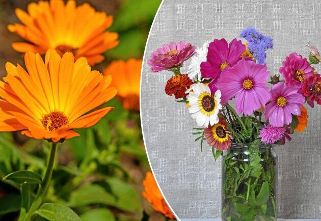 Låt barnen plocka blommor och plocka själv. Planera en hel rabatt där det är fritt fram.