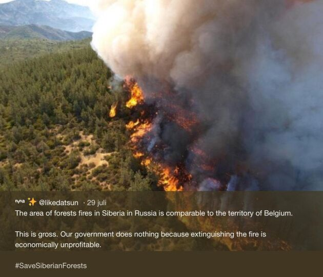 """""""Regeringen gör ingenting - för att våra skogar inte är ekonomiskt värdefulla. Äckligt"""", skriver en användare på Instagram."""