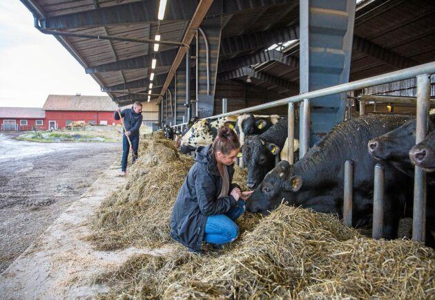 Djurhälsan och arbetsmiljön står i fokus för Tobias Larsson och Camilla Söderberg, som är sjätte generationen lantbrukare på Hesselby lantbruk i Sörmland.