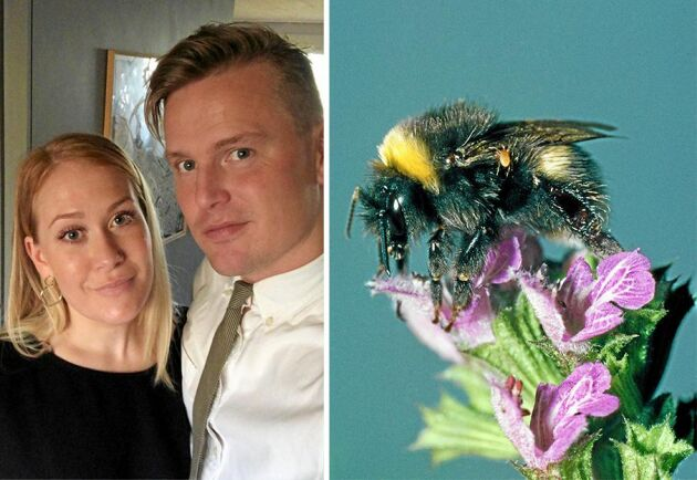 Emilia och Nils som bor i Bagarmossen i Stockholm ville sprida kunskap om humlornas betydelse i naturen.
