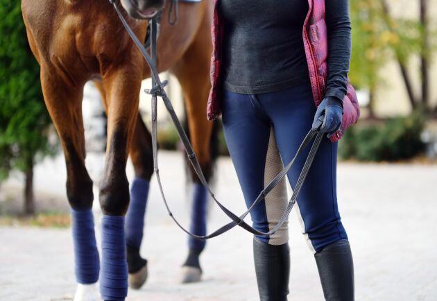 Enligt studien tycker anställda som arbetar med hästar att arbetet är attraktivt och ger livskvalitet.