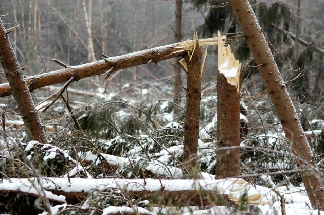 Hittills tyder signalerna på att denna storm inte orsakat stora skador på skog.