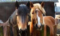 Registrering av hästar ska minska spridningen av kvarka