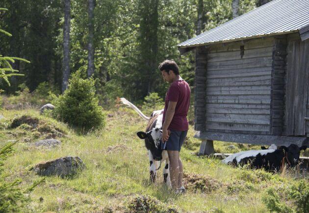 Baqer Mosawi har skaffat sig ett liv i Sverige som fäbodbrukare och säljer sina egna produkter till folket i bygden. Nu hotas han av utvisning.