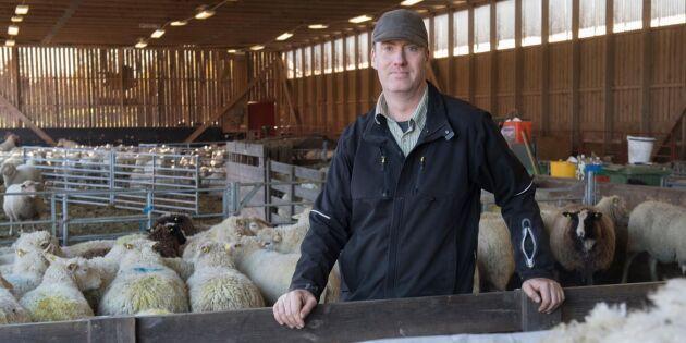 Svensk ull – från soptippen till modehusen