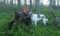 Tre döms till fängelse för jaktbrott