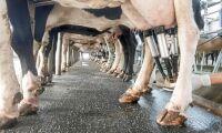 """""""Mejeriföretagen håller oss på halster"""""""