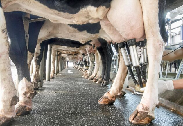 Totalt visar BAL:s siffror att tyska mjölkbönder gått back på varje producerad liter mjölk ända sedan 2009.