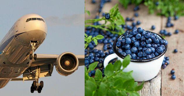 Vänta och längta efter svenska bär och grönsaker i säsong i stället för att köpa färska råvaror som flugits hit.