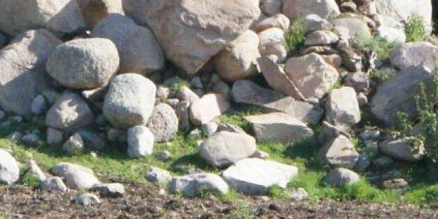 Röjde sten och skrot – fick betala böter