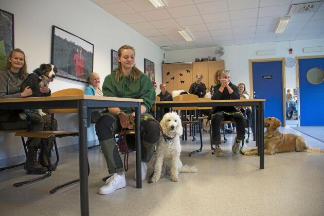 Hunden i skolbänken. När klassen Hundsport tre har hundträning på schemat får hundarna följa med in, åtminstone ibland.