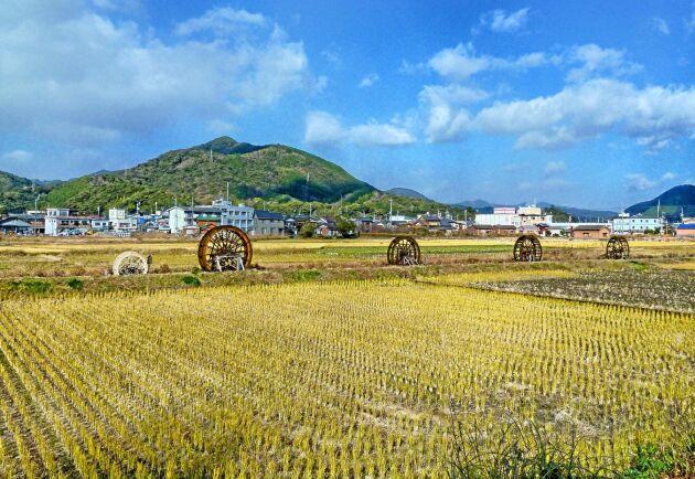 Hoppet har tänds för det japanska jordbruket sedan landets industriföretag visat intresse för att investera.