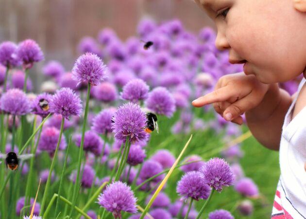 Så kan du odla för insekterna – och hedja utrotningen