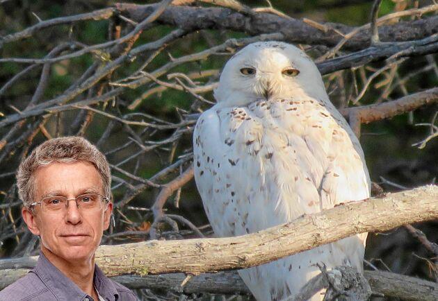 När vi väl hittat ugglan lät den sig beskådas och fotograferas tills vi fågelskådare tröttnade.