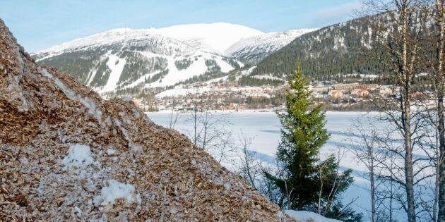 Skogsägare kan gå miste om tiotals miljoner