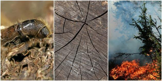 Quiz: Vad minns du från skogsåret 2018?
