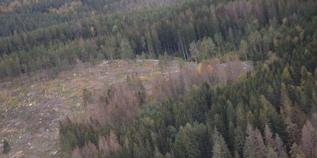Granbarkborre orsak till sämre resultat för Södra