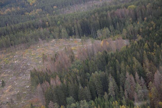 Granbarkborreskador i Sverige och Centraleuropa har lett till ett överutbud på sågade trävaror.
