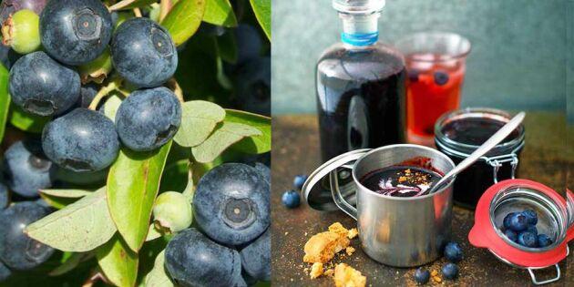 Så lätt gör du sommarens godaste blåbärssylt