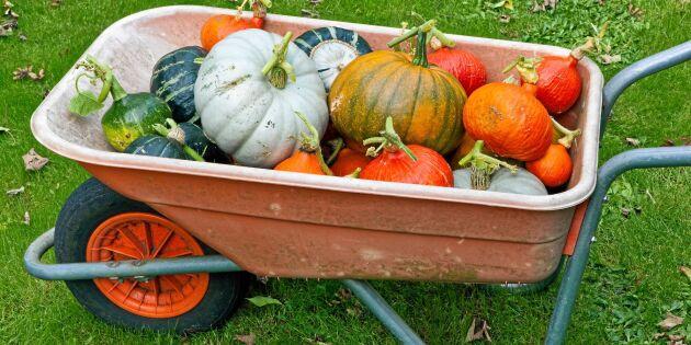 Så lagras skörden – grönsak för grönsak