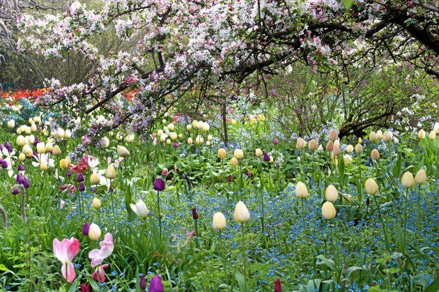 VÅRLÄNGTAN. Plantera nu och njut till våren. Foto: IBulb