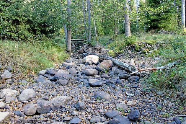Fräsebäck, gränsbäcken mellan Svealand och Götaland, tredje hösten utan vatten efter att Länsstyrelsen har rivit strandskoningar, enligt skribenten.