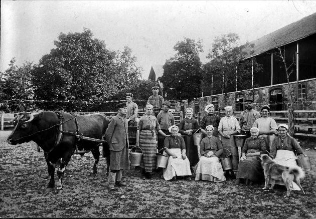 Statare, mjölkerskor och ladugårdskarlar framför ladugården på Julita gård i Södermanland.