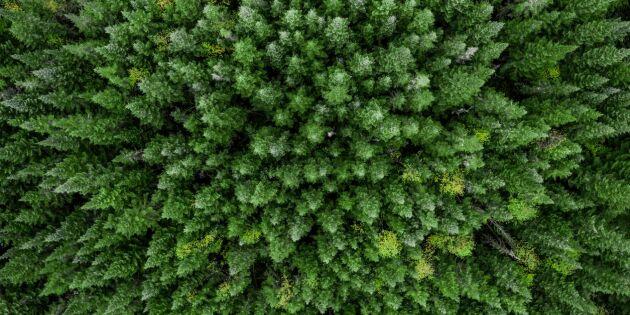Så kan vi använda skogen mer fiffigt för en hållbar framtid