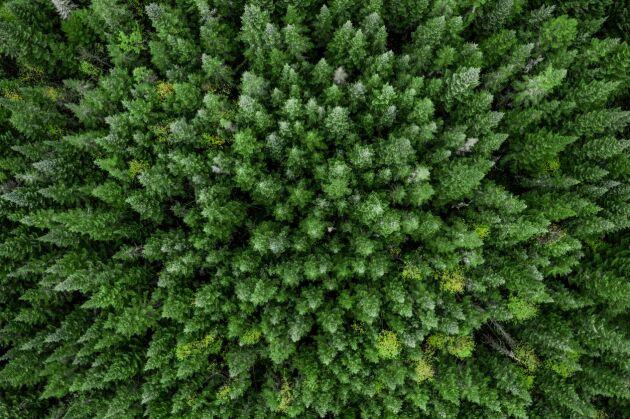 Med en världsbefolkning på snart 10 miljarder människor kommer det att krävas att natur används på ett förhållandevis rationellt sätt, skriver Anders Pettersson i ett debattinlägg.