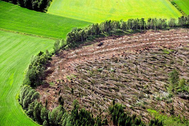 Stormen Gudrun drog i januari 2005 in över de småländska skogarna och blåste ner ett till synes oändligt antal träd i sin väg.