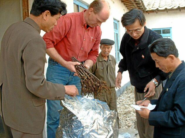 Sven Erik Johansson hjälper ett kooperativ i Nordkorea med ympade rötter till äppelplantor.