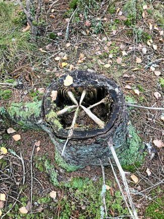 Veckans skogsbild kommer från skogarna vid Malingsbo camping.