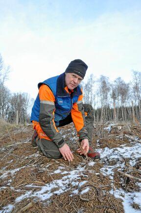"""""""Detta är bara början"""", befarar Christer Wallin, Skara. Han tror att skogsägare behöver ha en beredskap för hur de ska hantera ett ökat vildsvinstryck. Själv har han fått 200 täckrotsplantor uppbökade."""