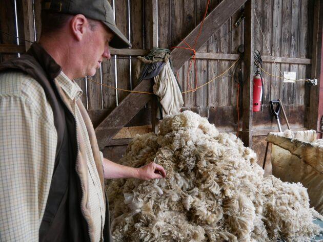 Tomas Olsson, som driver Norrby gård, samlar ihop ull från klippningen.