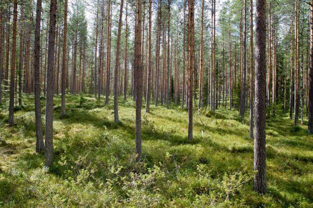 Den svenska skogen binder koldioxid och ju mer som avverkas desto större blir klimatnyttan, så länge tillväxten upprätthålls.