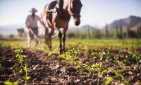 Argentinska lantbrukare går med på royalties till Monsanto