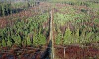 ATL TV: Skogen åter efter stormen Gudrun