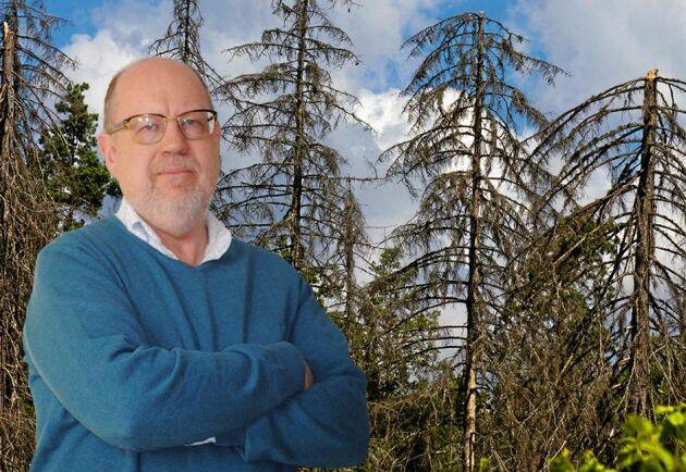 Granbarkborren är det största hotet mot gran i södra och mellersta Sverige, skriver Knut Persson.