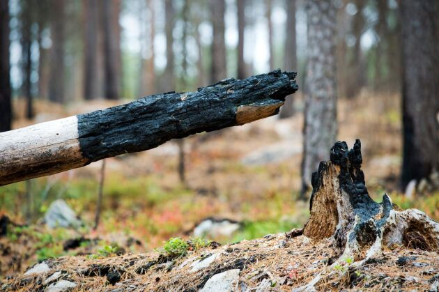 Att låta skogsbränderna härja i ett förändrat klimat har ett högt pris, skriver Sven Olov Karlsson.