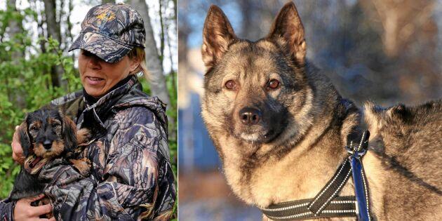 Så väljer du jakthund – kompis för skogsliv och soffhörn