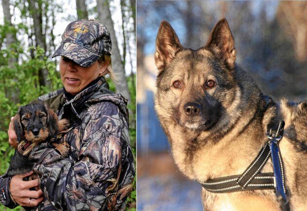 Välj rätt jakthund och du får en fin vän, både hemma och i skogen. Här listar vi olika jakthundsraser!