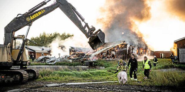 Efter den stora branden - nu byggs stallet upp igen