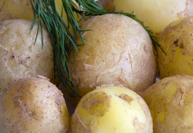 En bidragande orsak till att KPI sjönk är butikspriserna på potatis i lösvikt, som sjunkit med nästan 42 procent efter årets första skördar.
