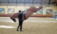 Hästsporten: visparkarbakut