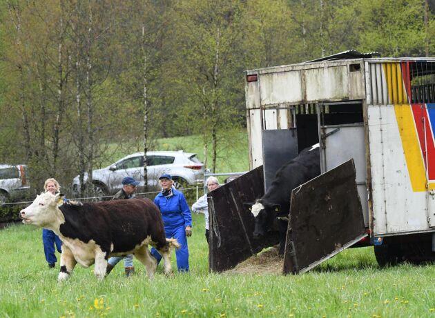 Ett hundratal djur evakuerades under en övning i Halland i helgen. Syftet med pilotprojektet som övningen är en del av är att förbättra beredskapen inför krissituationer.