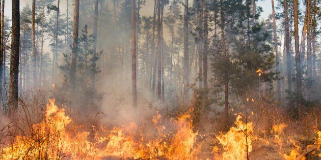 Sommartorka ökar risken för skogsbränder