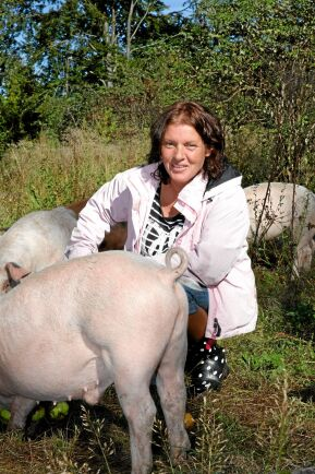 Nyfikna grisar som gärna kikar förbi för att roffa åt sig några äpplen ur hinken.
