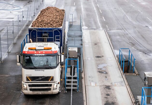 Uppskattningsvis har driftstörningarna lett till att 100000 ton betor mindre än normalt har kunnat processas.