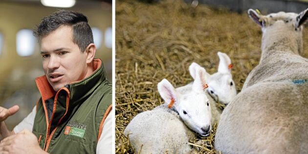 De har lämnat fårfarmen och de 600 djuren